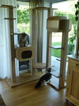 Katzenbaum stabil